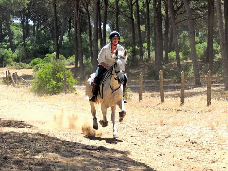Enjoying a gallop in the forest