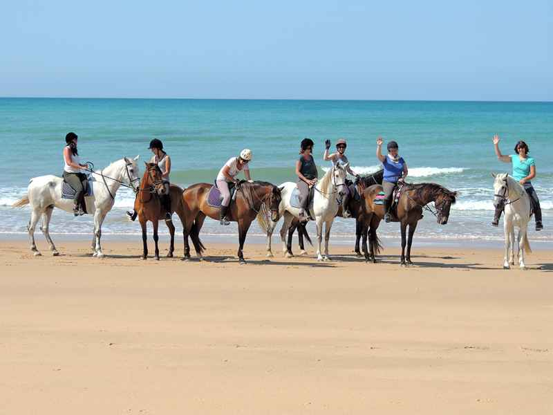 A group of horses being ridden on the beach