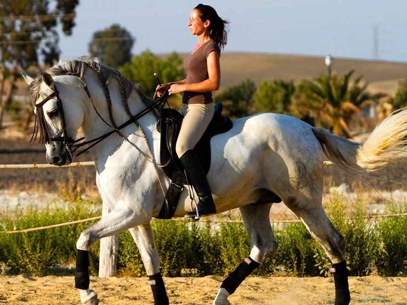 Riding on our classical equestrian holiday