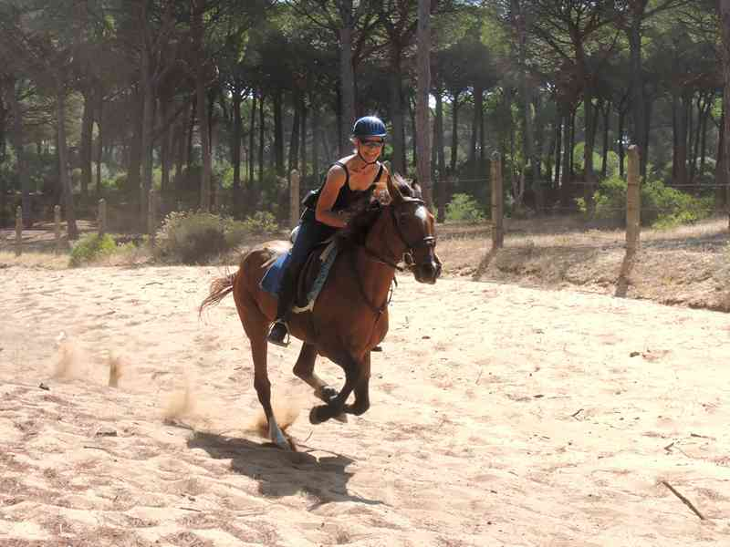 A horse galloping on a firebreak on our equestrian short break