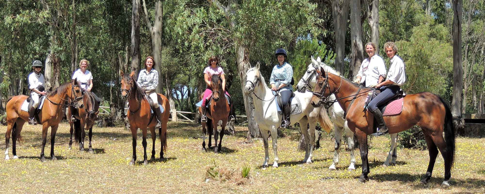 Horses being ridden in a pine forest.