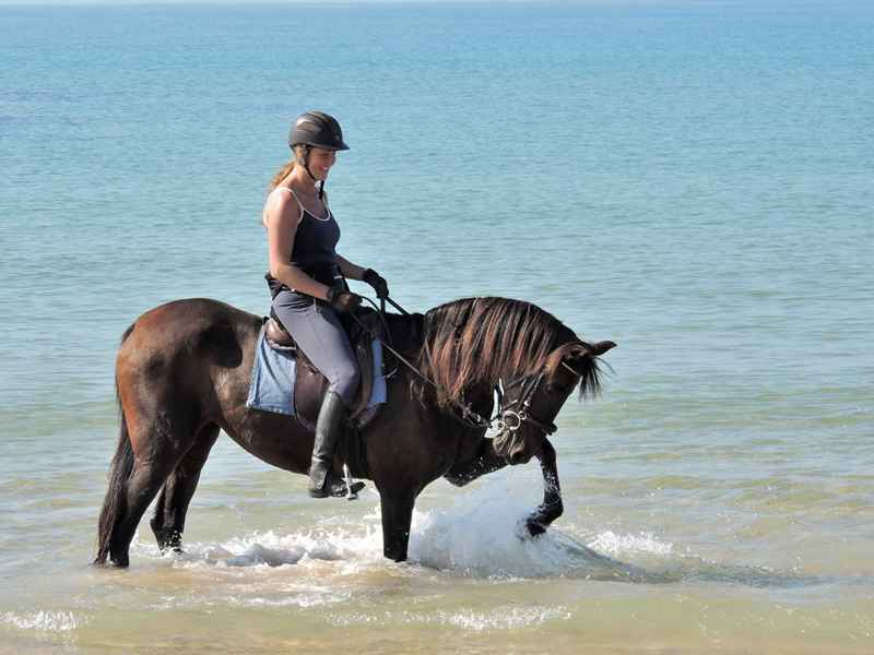 Horse paddling in the sea
