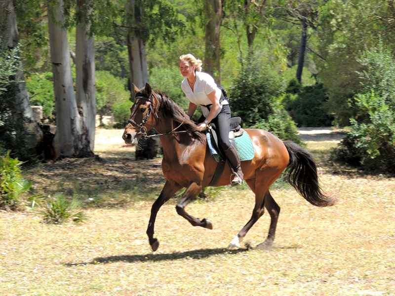 Horse riding through the woods on our equestrian vacation