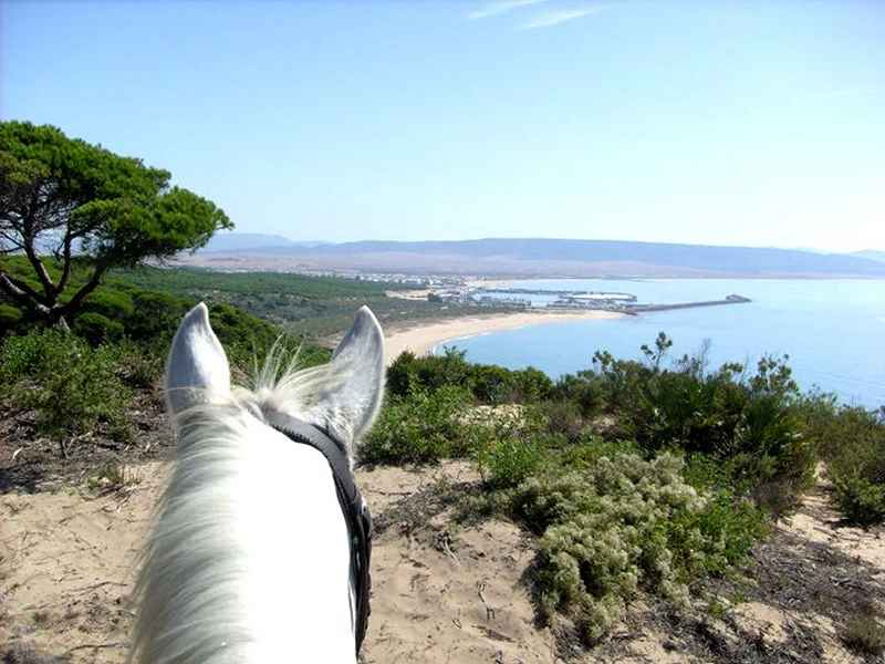A horse overlooking a view