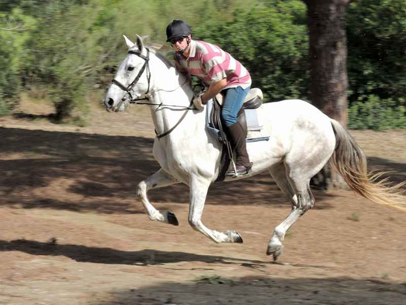 A horse cantering through the forest on our equestrian vacation