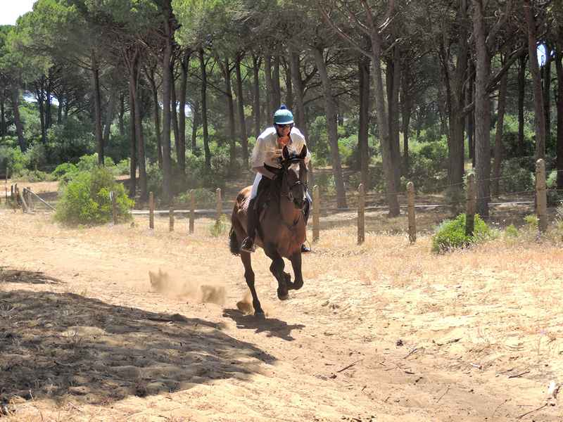 Riding horses through a forest on our horse riding holidays in Spain