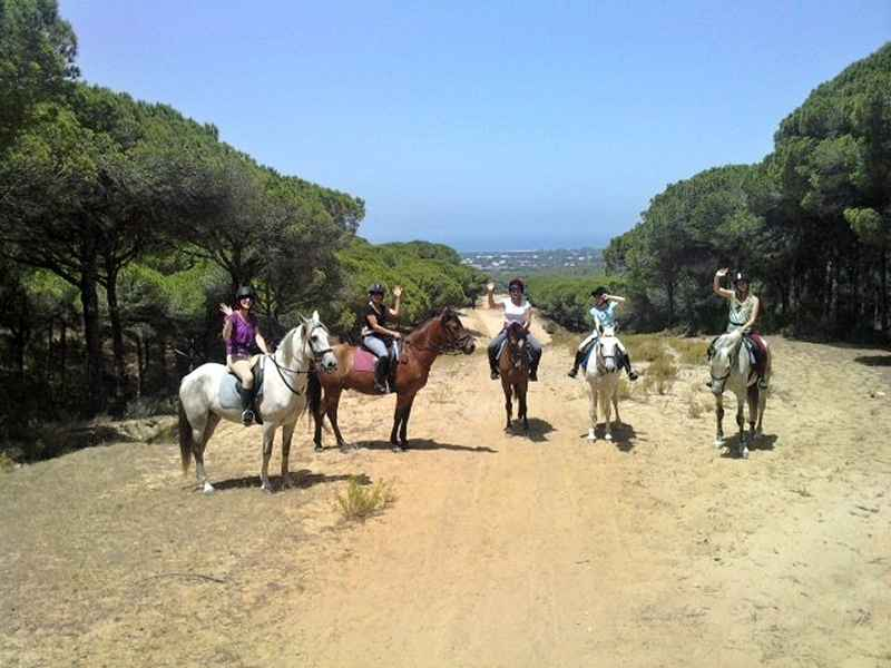 horses at view during our riding holiday