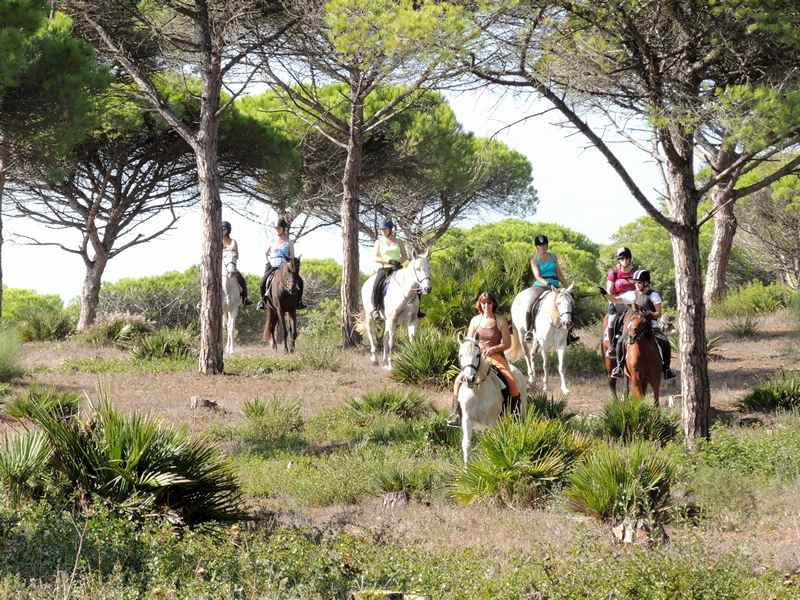 A group of horses being ridden in the forest