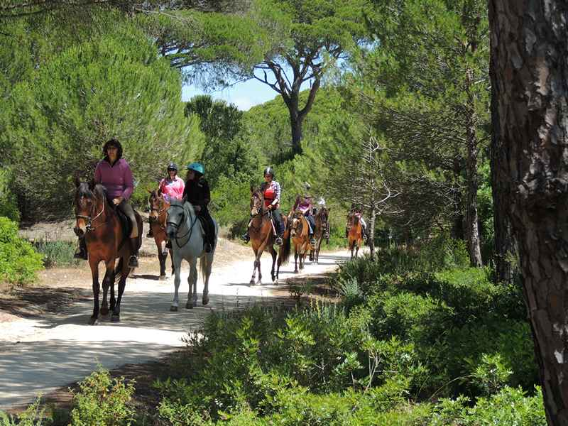 Riding horses through the forest on our equestrian vacation
