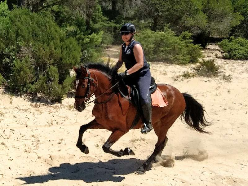 Horse riding holiday in Spain with superb forest riding